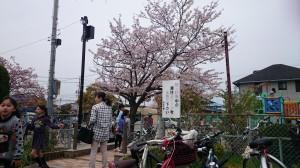 桜(高松地区)